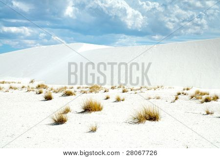 sand dunes and desert plants
