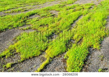 green grass growing through an old paved road