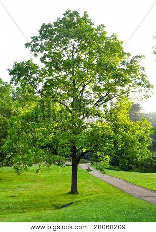 lone tree beside a trail