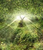 image of garden eden  - A picture of beautiful garden lightened by sun rays - JPG