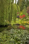Lake and trees in well-known gardens Butchart Gardens on island poster