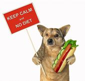 The Mongrel Dog Holds A Big Hot Dog And A Poster. Keep Calm And No Diet. Isolated. poster