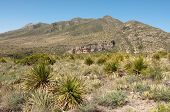 pic of stagecoach  - mckittrick canyon mountains - JPG