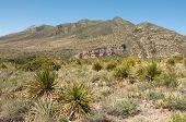 stock photo of stagecoach  - mckittrick canyon mountains - JPG