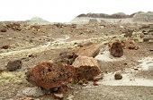 picture of paleozoic  - fields of petrified wood - JPG