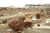 stock photo of paleozoic  - fields of petrified wood - JPG