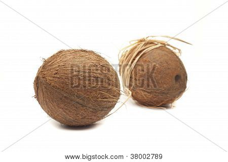 Two Coconuts With Bow
