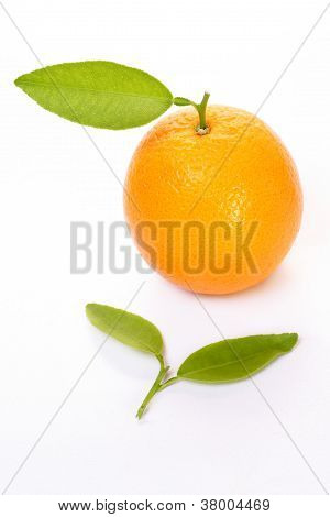 Fresh Orange With Green Leaf