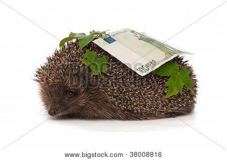 hedgehog with dollars profit
