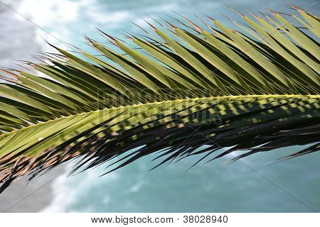 Natural tropical background