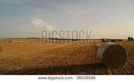 campo di grano - wheat field