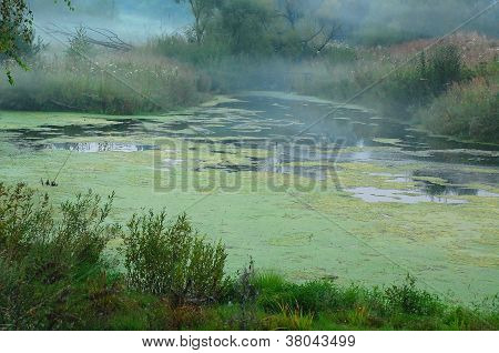 Foggy Swamp In Central Russia