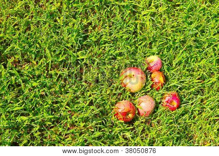 apple on the grassy