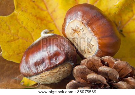 Autum Leaves With Conkers And Fir Cone