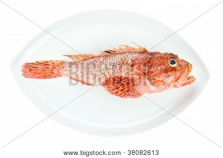 Red Scorpionfish Prepared Seafood Oval Dish Isolated On White Background