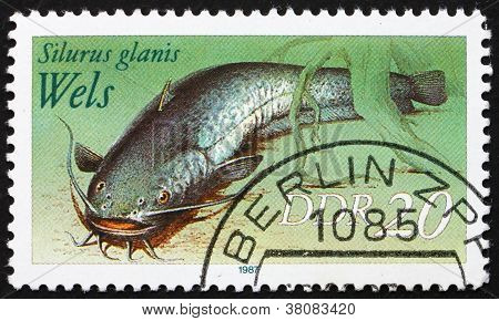 Postage Stamp Gdr 1987 Wels Catfish, Sheatfish, Silurus Glanis