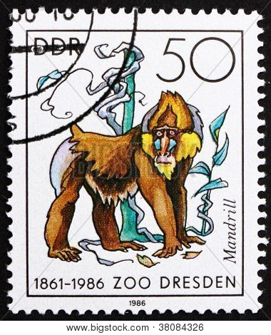 Postage Stamp Gdr 1986 Mandrill Monkey