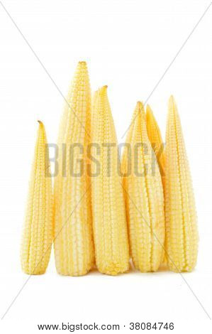 Baby corn on a white background