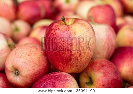 1 Apple in a Bunch