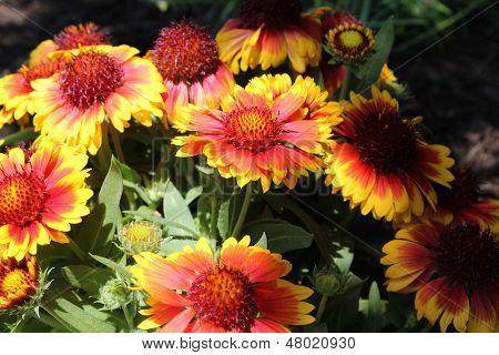 Decke Blumen