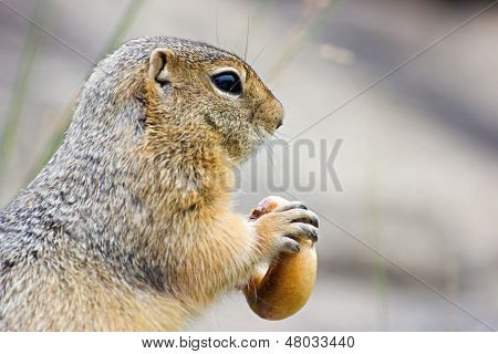 Gopher con Bagel