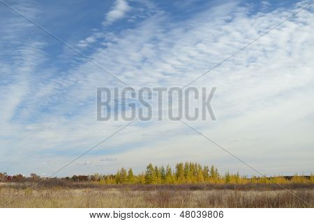 Clouds Abovetamaracks In The Fall