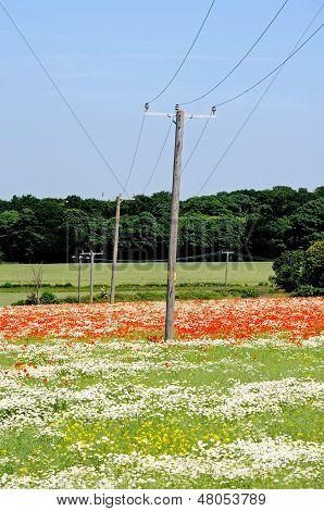 Postes telegráficos através dos campos, Lichfield, Inglaterra.