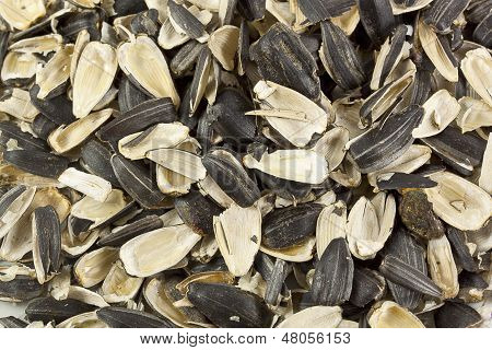 Empty Shells Of Sunflower Seeds