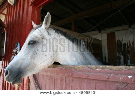Hest0066