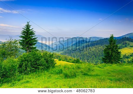 Two Green Pine Tree On Meadow In The Mountains Early Morning