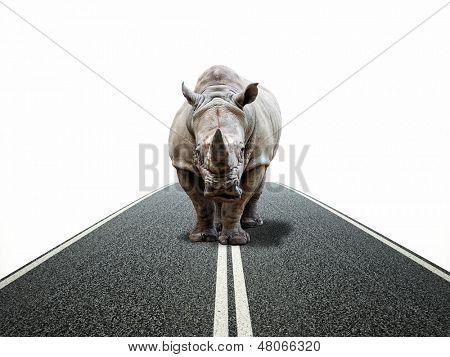 huge rhino on  asphalt way