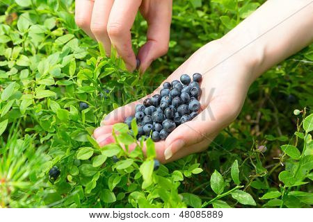 Woman's hand with blueberries