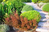 picture of public housing  - Landscaping in the garden - JPG
