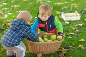 stock photo of crips  - Two little siblings in autumn garden with basket full of apples