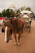 horse with the beautiful carriage