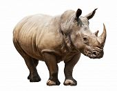 foto of rhino  - huge rhino isolated on white - JPG