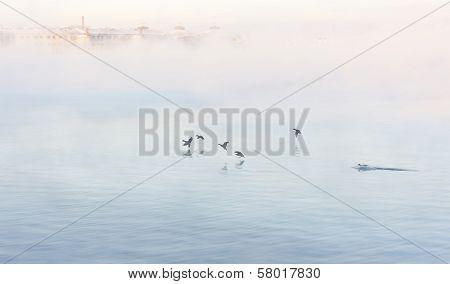 Birds Land Into Vaporing Sea