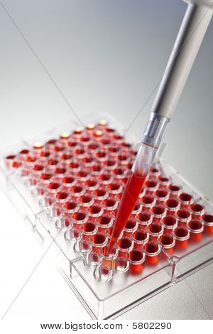 Blood Sample Scientific Research With A Pipette And Cell Plate