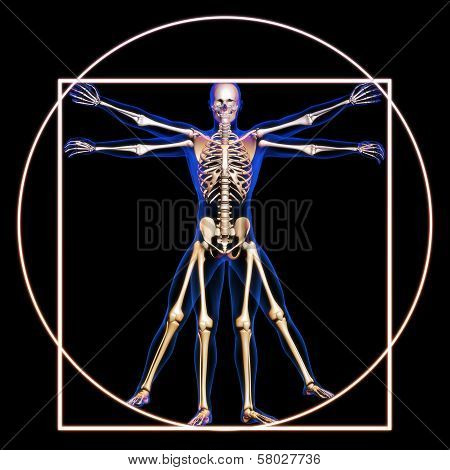 Vitruvian man with bones concept