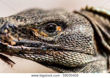 Reptilian Head