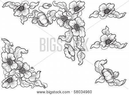 flowerses and leaves of the poppy