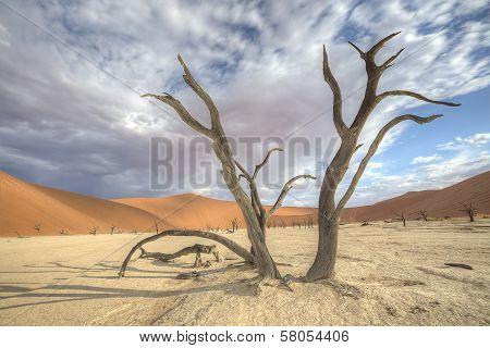 Sossusvlei Deadvlei Trees, Dunes