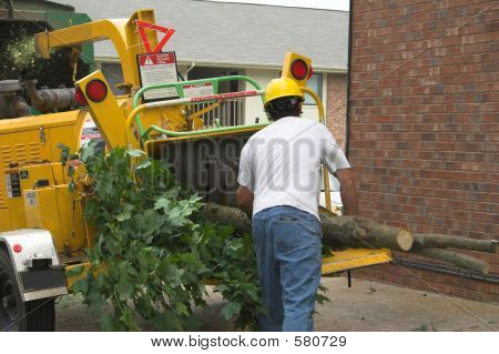 Tree Workers Chipping