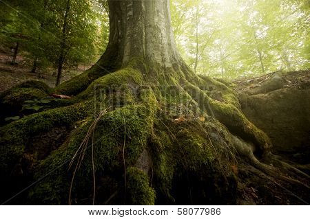 Tree with moss covered roots in a forest in summer