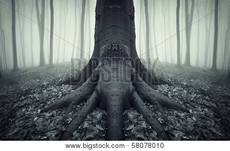 Dark tree with roots in a spooky dark mysterious forest with fog