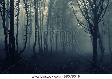 Dark spooky dark eerie forest with fog on halloween evening