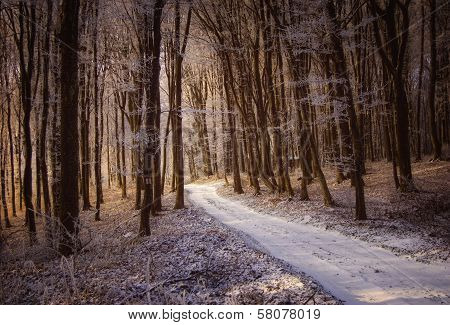 Snowy road in a forest with snow in winter at sunrise