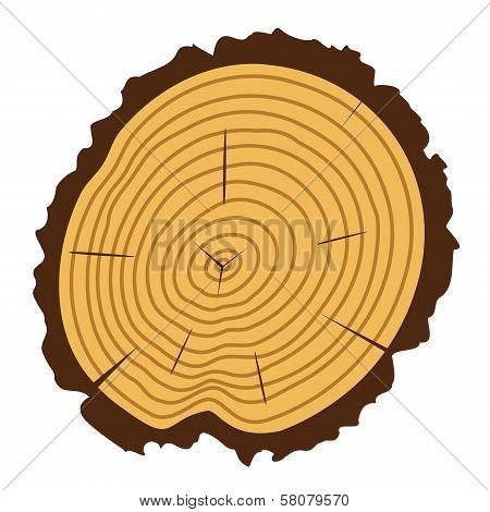 Vector Wooden Cut Of A Tree Log