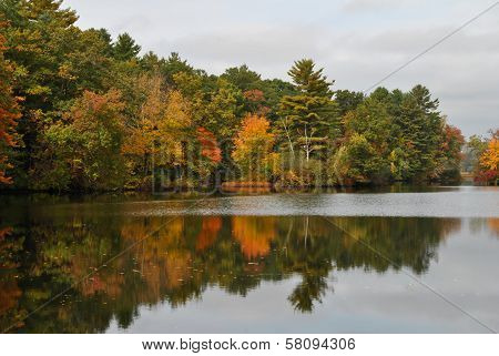 Colorful Fall Foliage on the Edge of a Still Pond