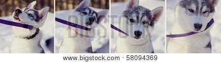 Stubborn puppy